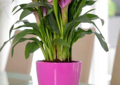 Produktfotografie Blumentopf aus Keramik mit Pflanze