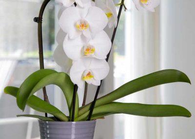 Produktfotografie Blumentopf aus Keramik mit Orchidee.
