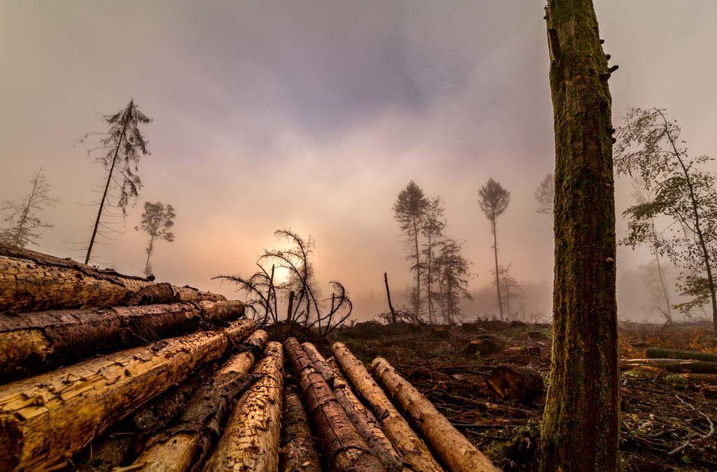 Waldsterben 2punkt0 – Westerwald besonders betroffen